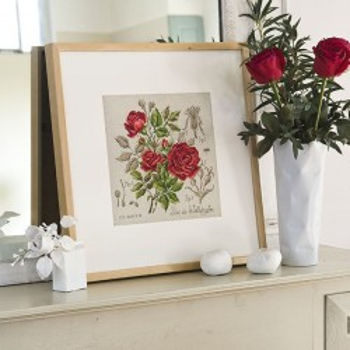 Aïda : Étude à la rose « Duc de Wellington » (maxi-grille) à broder au point de croix
