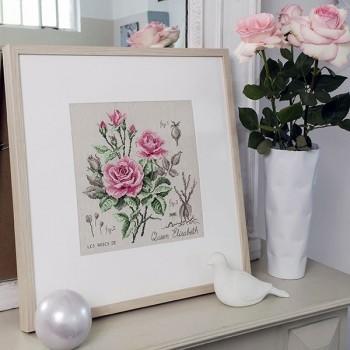 Linen rose study «Queen Elisabeth»(maxi-pattern)