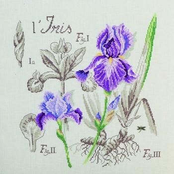 Aïda : Iris Study (maxi-pattern)