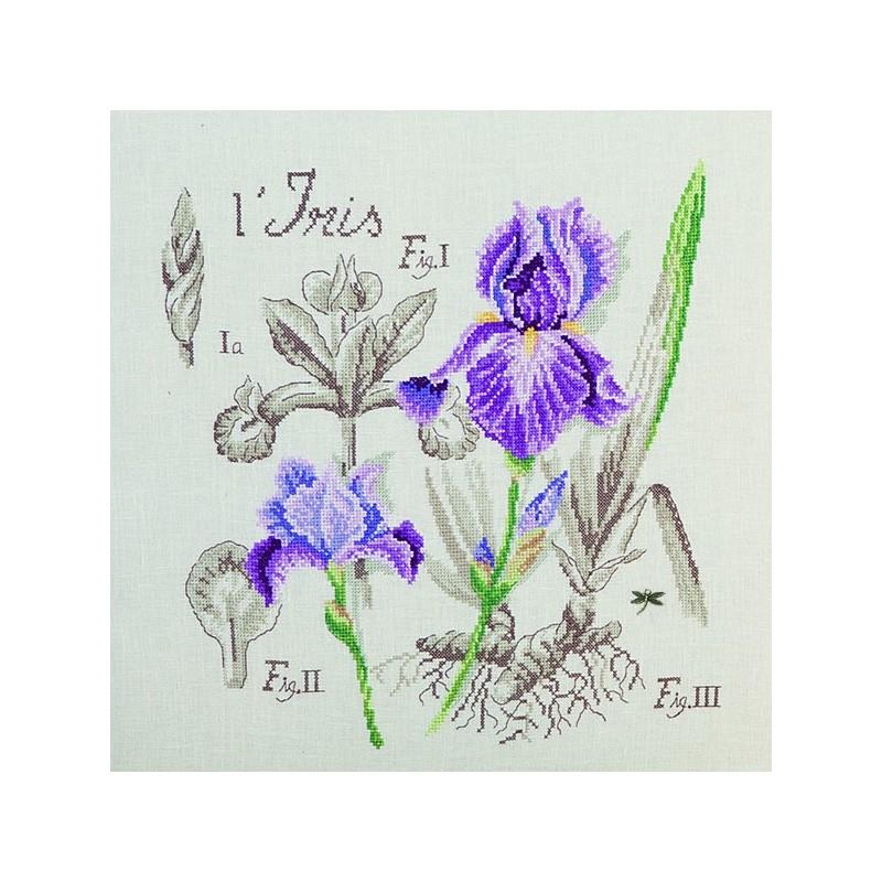 Aïda : Étude à l'Iris (maxi-grille) à broder au point de croix