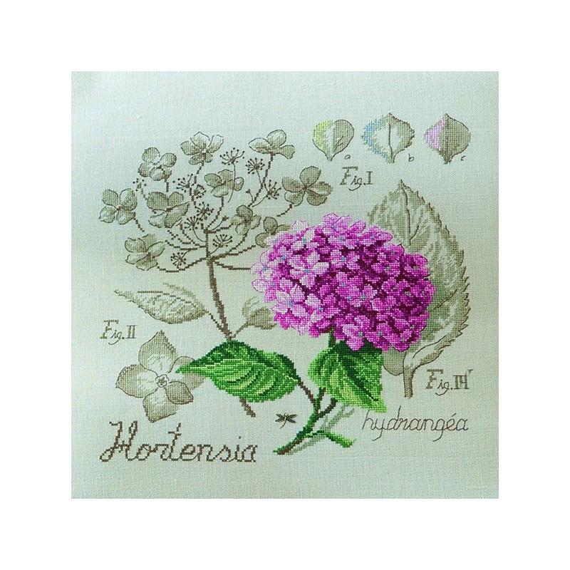 Lin : Étude à l'Hortensia (maxi-grille) à broder au point de croix