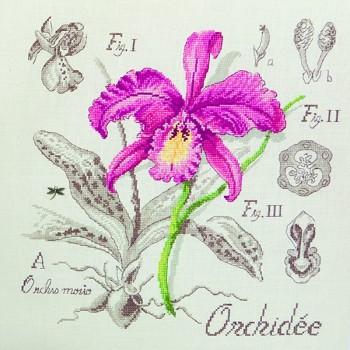 Aïda : Étude à l'Orchidée (maxi-grille) à broder au point de croix