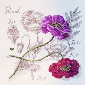 Linen : Poppy Study (maxi-pattern)