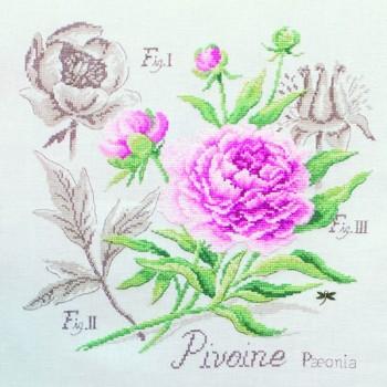 Lin : Étude à la Pivoine (maxi-grille) à broder au point de croix