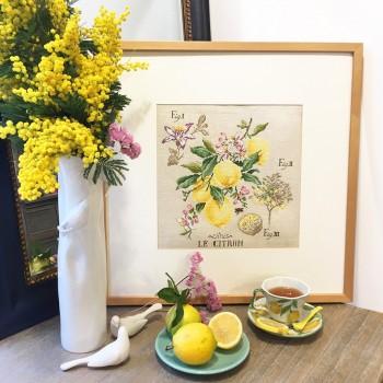 Aïda « Lemon » Study (Maxi pattern)